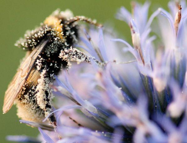 La France devient le premier pays à interdire cinq pesticides liés à l'effondrement des populations d'abeilles