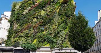 Paris : la mairie veut végétaliser la capitale